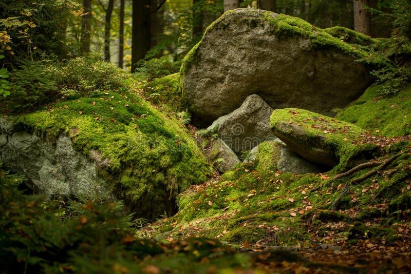 Reusachtige rotsen in het bos royalty-vrije stock afbeelding