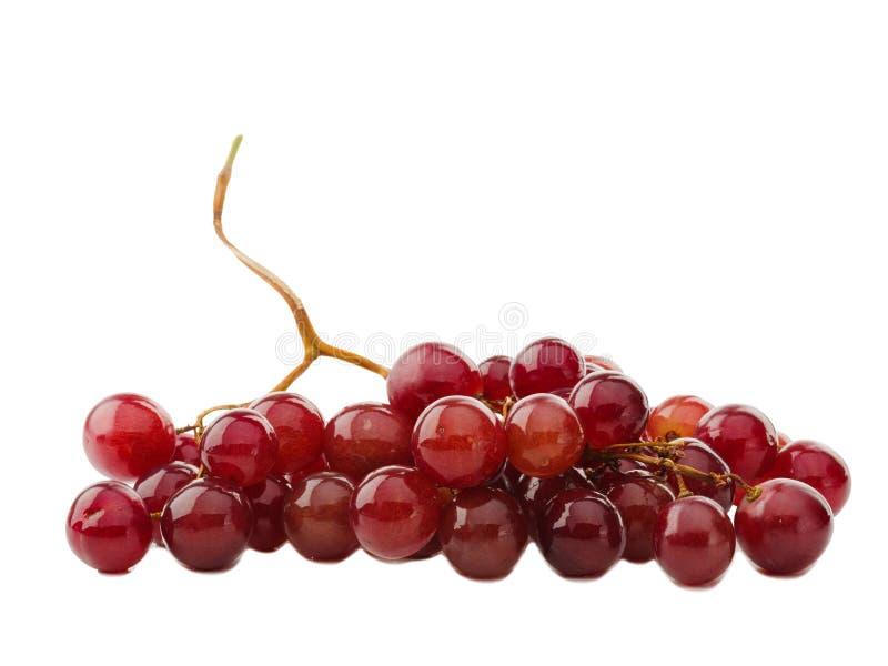 Reusachtige sappige rode druiven één Close-up Geïsoleerd op wit stock afbeeldingen
