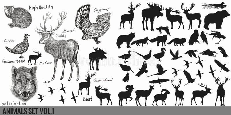 Reusachtige super inzameling of reeks van vector getrokken die hand wordt gedetailleerd voor royalty-vrije illustratie