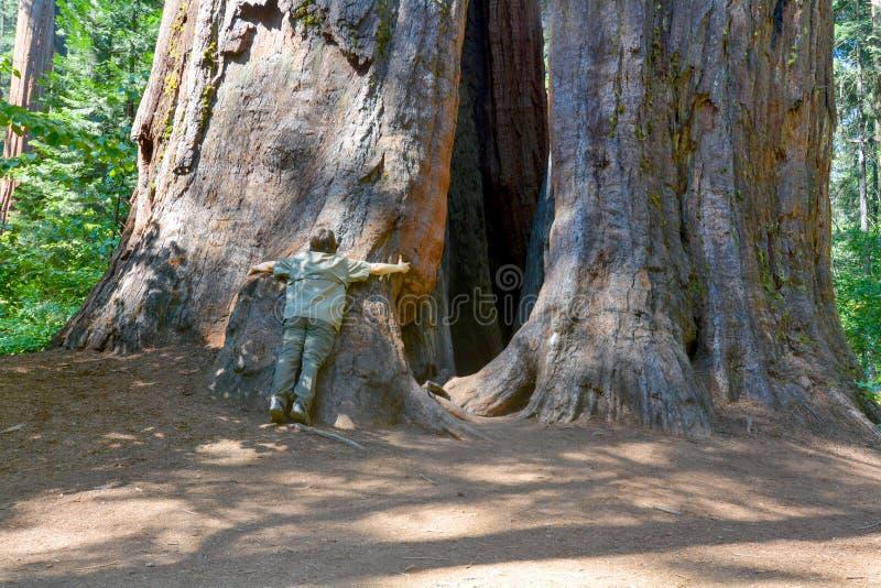 Reuze bomen stock afbeeldingen