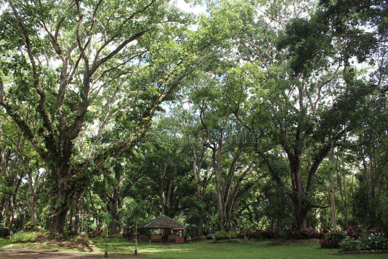 Reuze bomen royalty-vrije stock afbeeldingen