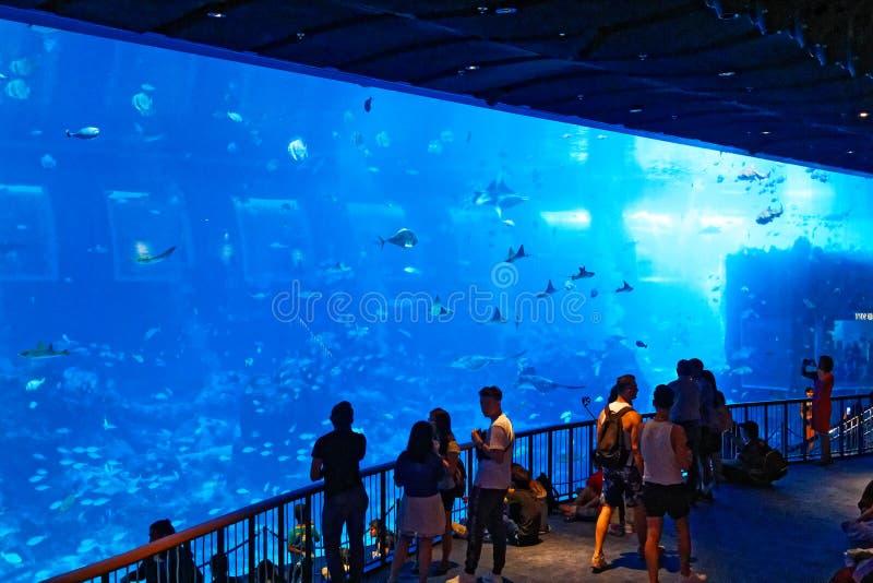Reuzeaquarium, OVERZEES Singapore stock afbeeldingen