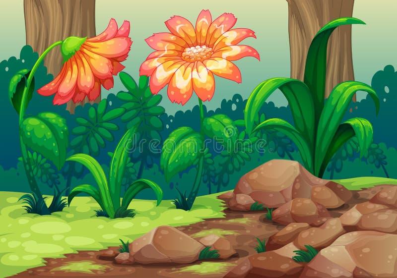 Reuzebloemen in het bos royalty-vrije illustratie