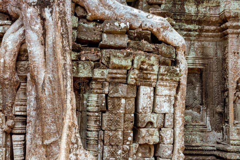 Reuzeboom en wortels in tempel Ta Prom Angkor wat royalty-vrije stock foto
