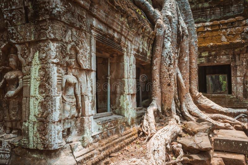 Reuzeboom en wortels in tempel Ta Prom Angkor wat royalty-vrije stock afbeelding