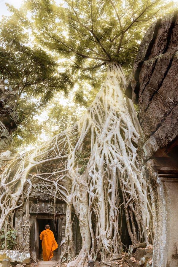 Reuzeboomwortels en monnik in tempel Ta Prom Angkor wat royalty-vrije stock afbeelding