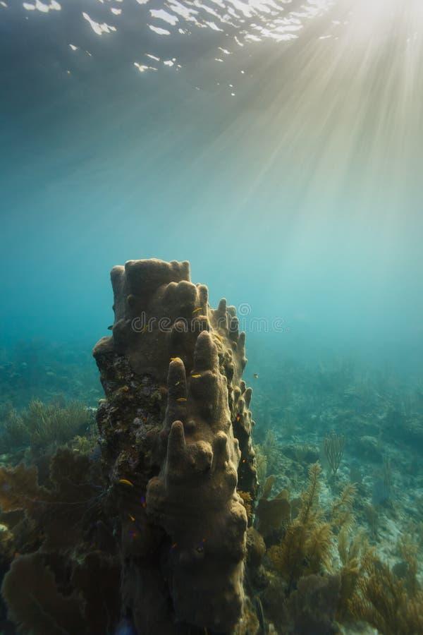 Reuzebuisspons op koraalrif in zonlicht royalty-vrije stock fotografie