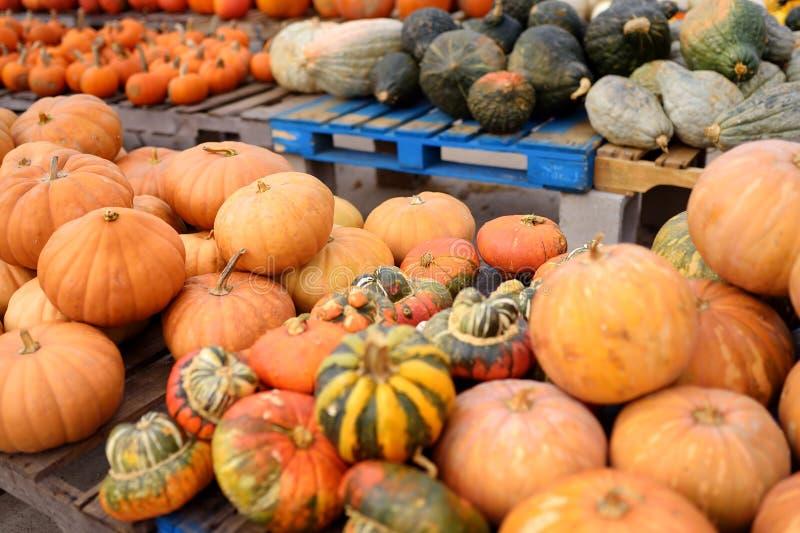 Reuzehoop van verse grote gezonde biopompoenen op landbouwlandbouwbedrijf bij de herfst royalty-vrije stock fotografie