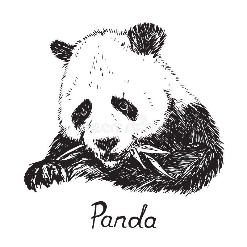 Reuzepanda die bamboebladeren, hand eten getrokken krabbelschets met inschrijving vector illustratie
