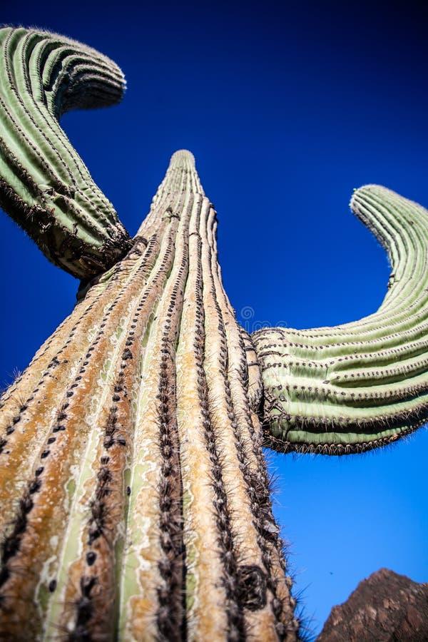 Reuzesaguaro-Cactus - Verticaal Close-up royalty-vrije stock foto's
