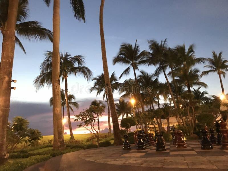 Reuzeschaakstukken en palmen stock fotografie