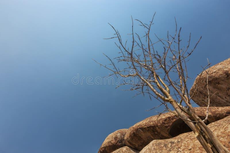 Reuzesteen, droge boom in de Namibe-Woestijn afrika angola royalty-vrije stock foto's