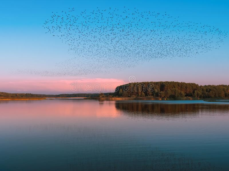 Reuzetroep van vogels het vliegen royalty-vrije stock afbeelding