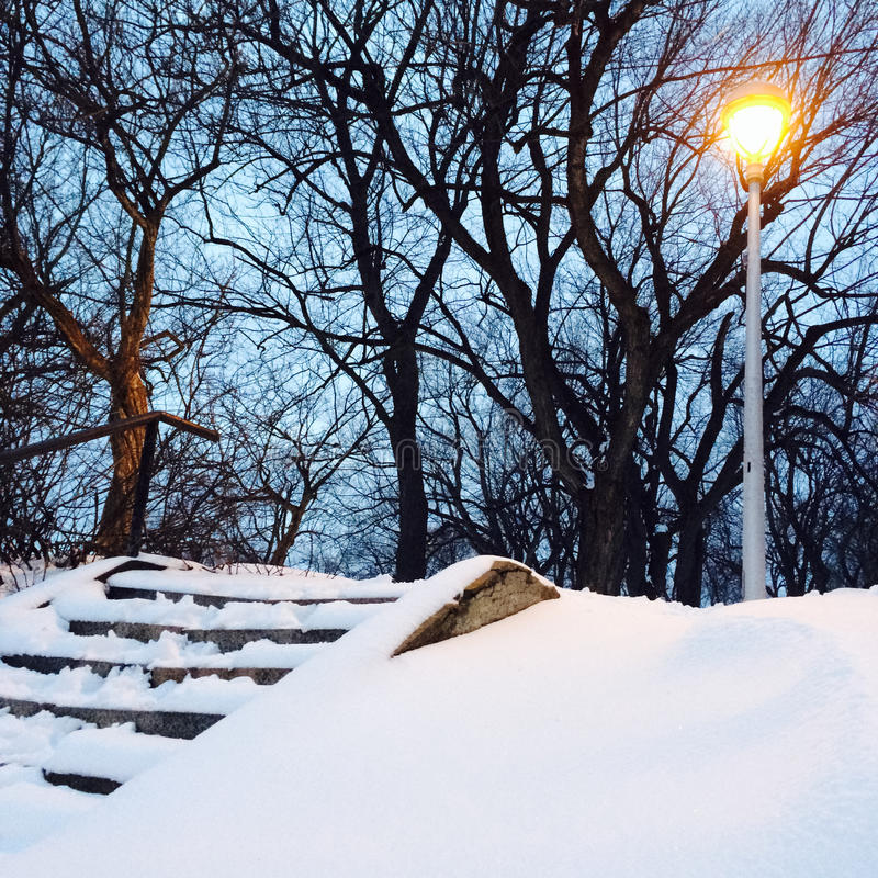Revérbero e árvores no parque nevado imagem de stock royalty free