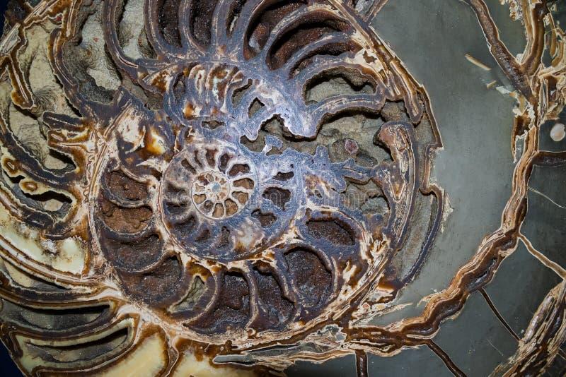 Revelando a espiral matemática de fibonacci imagem de stock