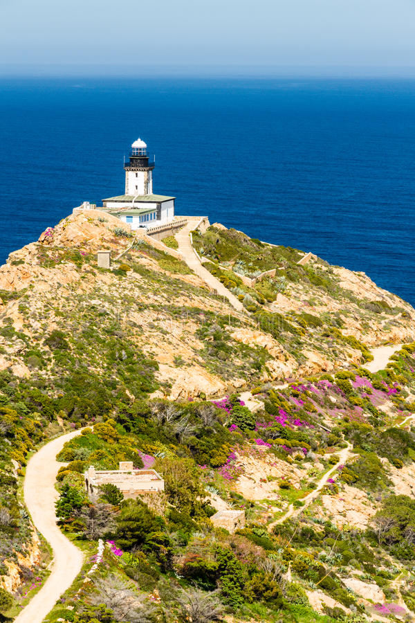 Download Revellata Lighthouse With Flowers And Maquis In Corsica Stock Image - Image: 39856917