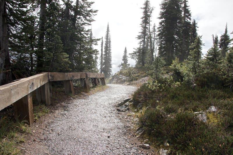 Revelstoke pathway. Lonely pathway on the foggy summit of Mount Revelstoke, Canada royalty free stock image