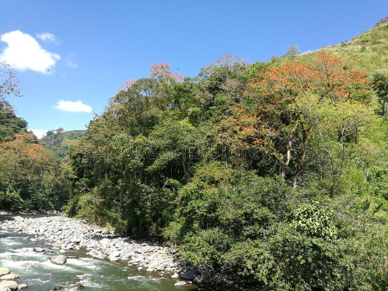 Reventazon河 库存照片
