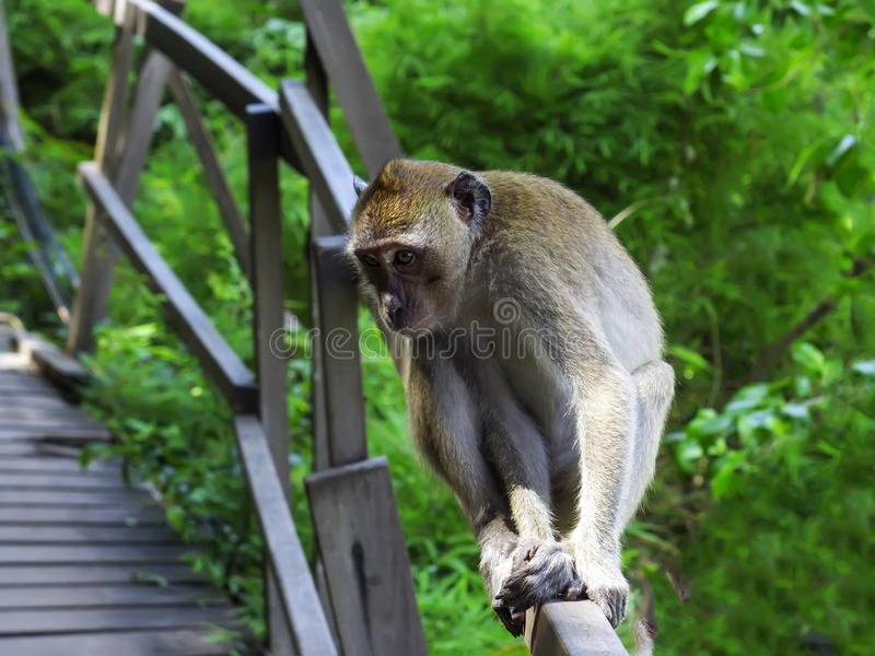 Download In A Reverie. stock photo. Image of tropical, tree, monkey - 32022352