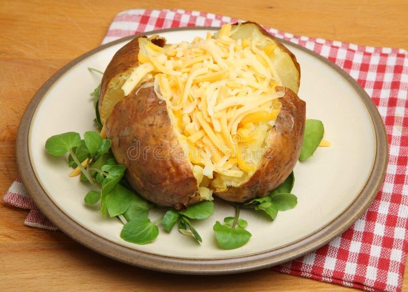 Revestimento ou batata cozida com queijo imagens de stock royalty free