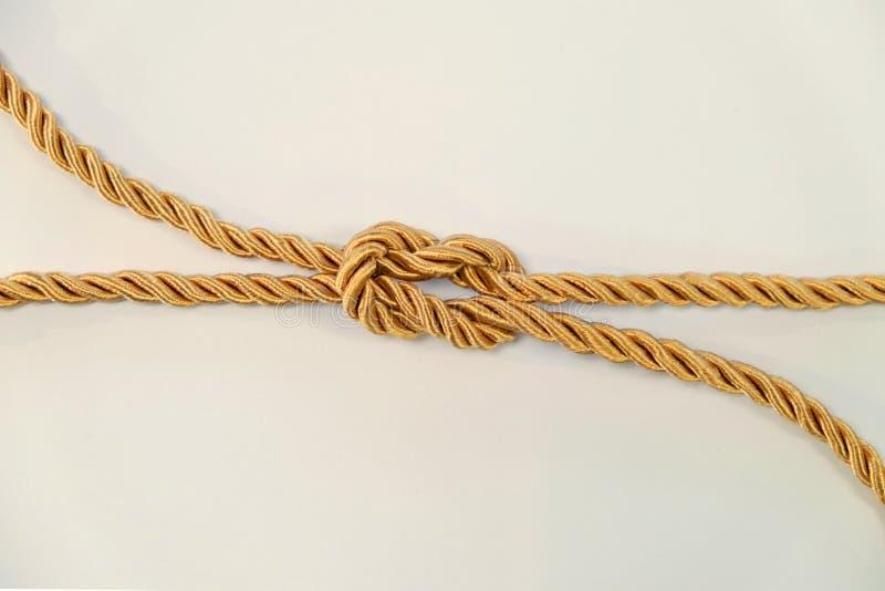 Revfnuren eller fyrkantig fnuren vid det guld- färgrepet arkivfoto