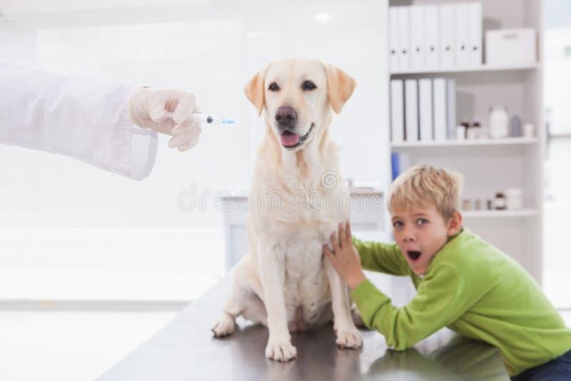 Revise el examen de un perro con su dueño asustado imagen de archivo