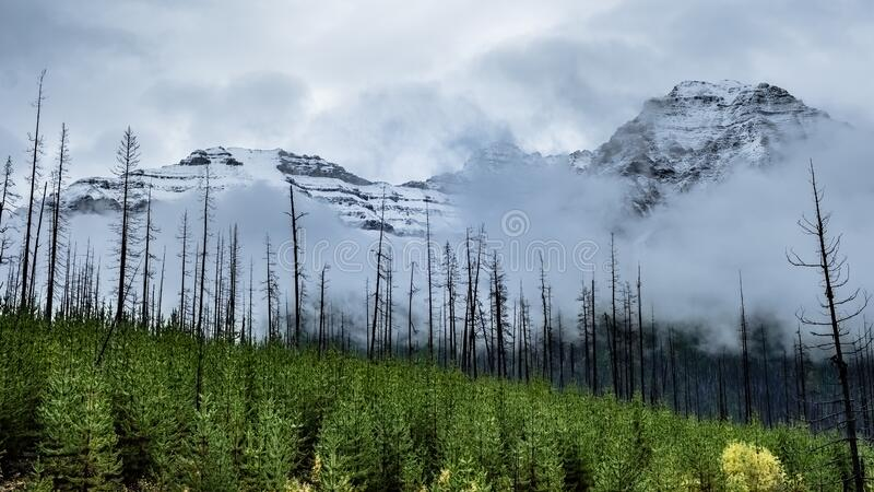 Revival after the Fire. The revival of nature, after the fire,- mother nature refreshes & nourished itself, Kootenay National Park, Canada royalty free stock image