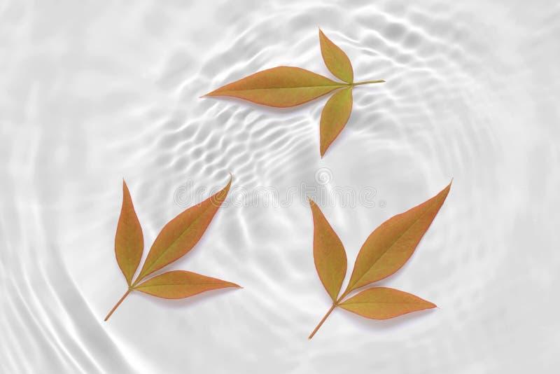 Rewolucjonistka barwił liścia abstrakt na pluskoczącym białej wody tekstury tle ilustracja wektor