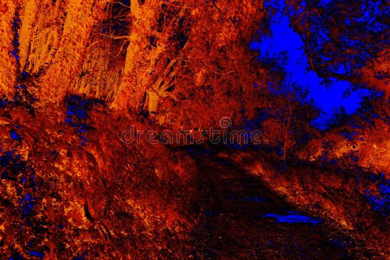 Rewolucjonistka i błękitny infrared las obraz stock