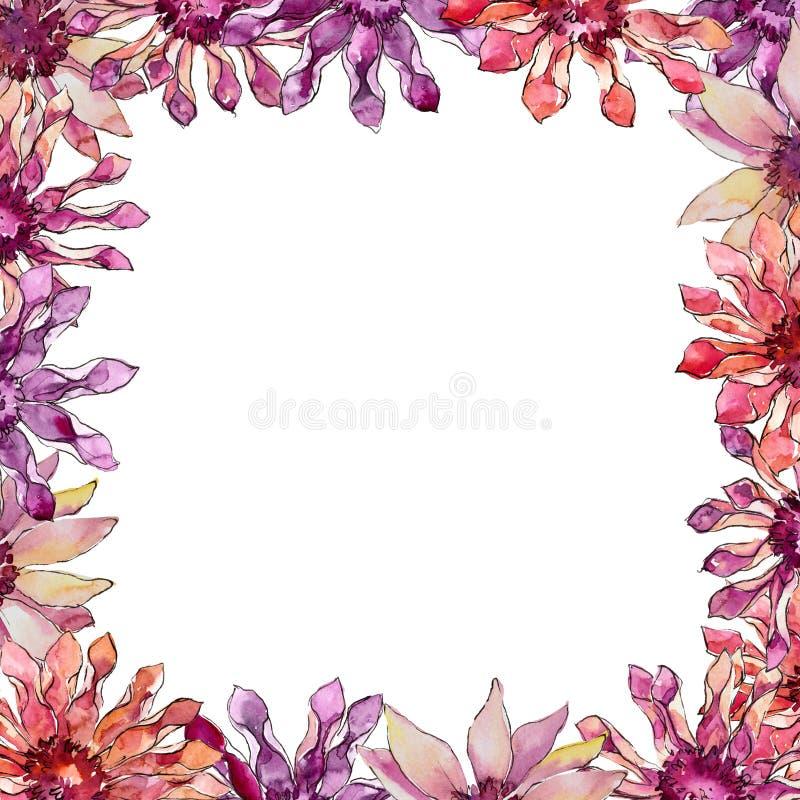 Rewolucjonistka i purpurowy afrykańskiej stokrotki wildflower Kwiecisty botaniczny kwiat Ramowy rabatowy ornamentu kwadrat ilustracja wektor