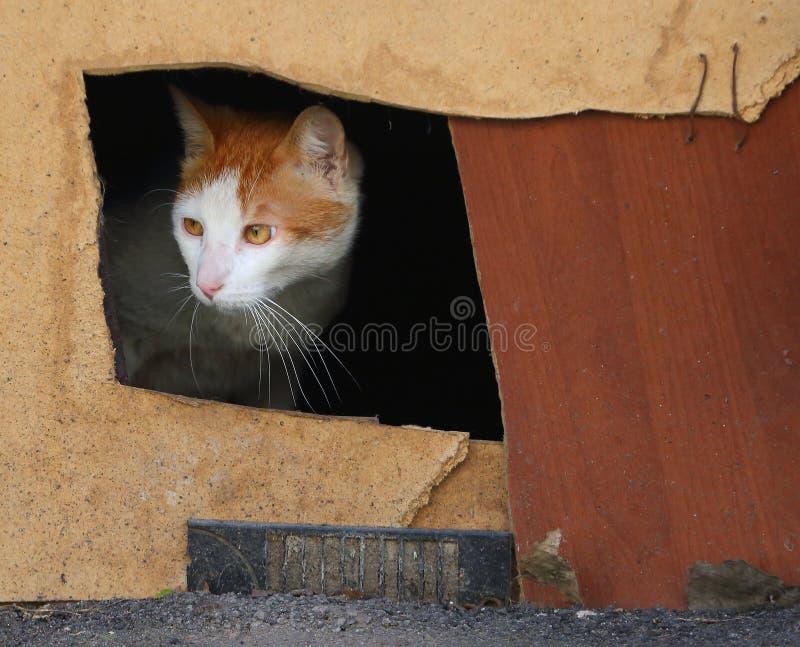 Rewolucjonistka kota spojrzenia z kot dziury obraz royalty free