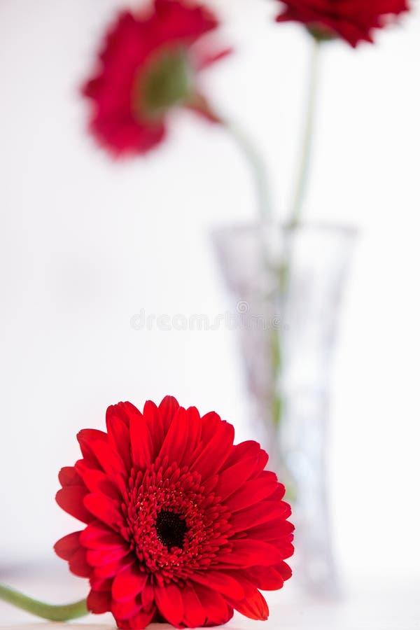 Rewolucjonistka kwiaty obrazy royalty free