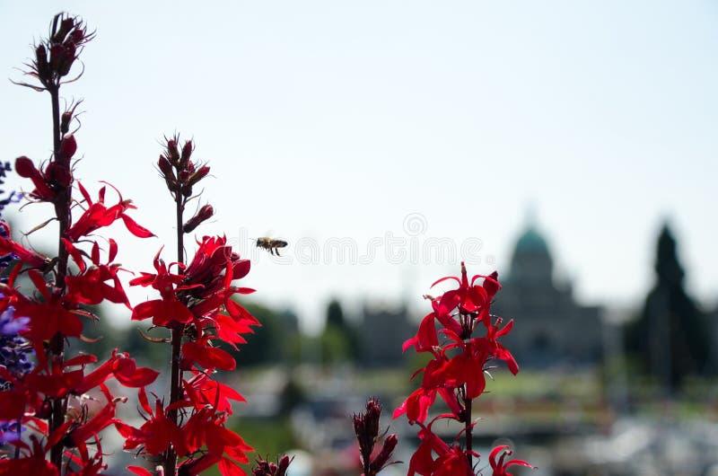 Rewolucjonistka kwiaty i pszczoła na Belleville ulicie z parlamentem Budują fotografia stock