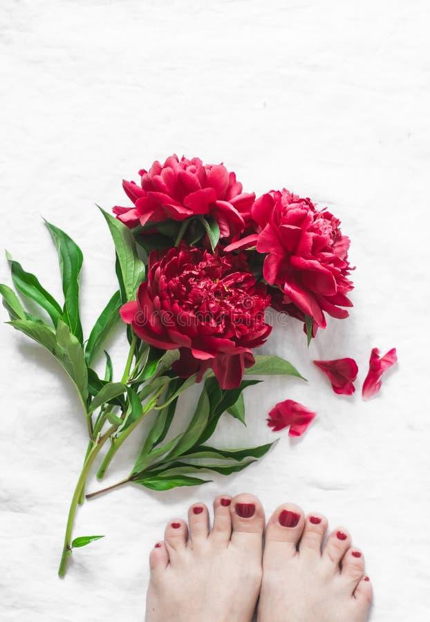 Rewolucjonistka kwitnie peonie i pięknych kobiety ` s cieki z czerwonym pedicure'em na lekkim tle, odgórny widok zdjęcia royalty free