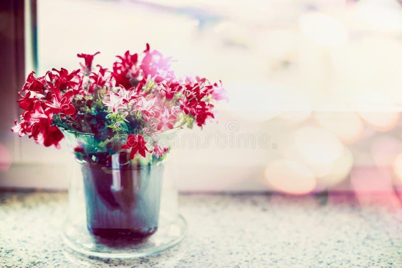Rewolucjonistka kwitnie w kwiatu garnku na nadokiennym parapecie z sprig oświetleniem obrazy royalty free