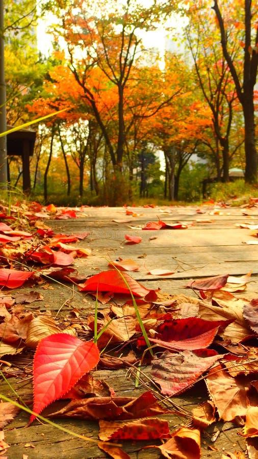 Rewolucjonistka liście w jesieni obrazy royalty free
