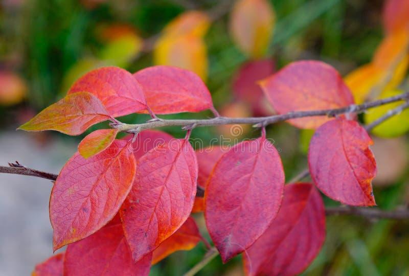 Rewolucjonistka liście w jesieni fotografia stock