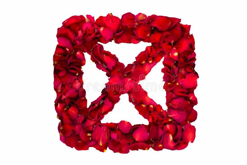 Rewolucjonistka suszący różani płatki w pudełkowatym tworzy X fotografia stock