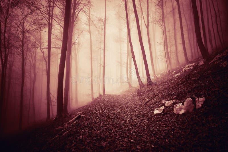 Rewolucjonistki barwiony mgłowy światło w tajemniczym lesie fotografia stock