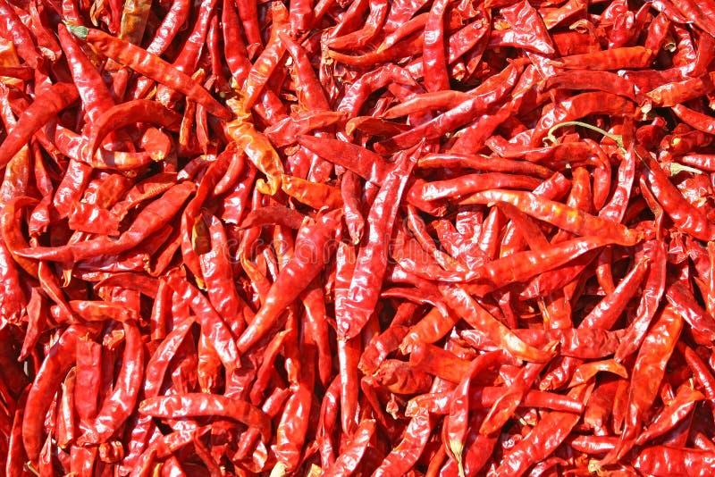 Rewolucjonistki chili wysuszony tło obrazy royalty free