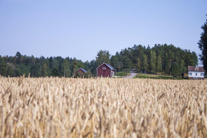 Rewolucjonistki domowy pszeniczny pole zdjęcia stock