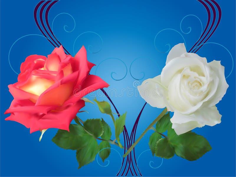 Rewolucjonistki i bielu róża kwitnie na błękicie ilustracji