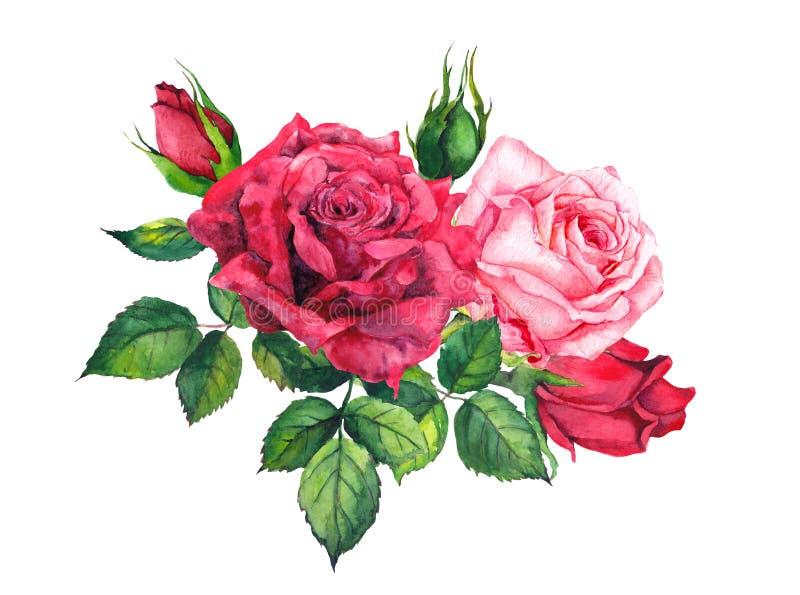 Rewolucjonistki i menchii róż bukiet Odosobniona akwarela royalty ilustracja
