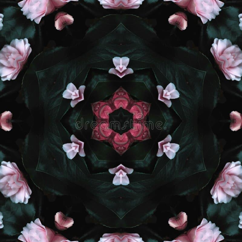 Rewolucjonistki i menchii róży tekstura zdjęcia stock