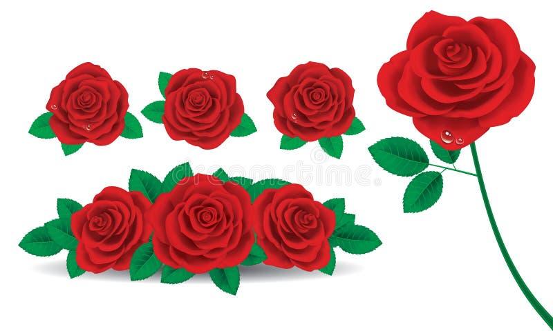 Rewolucjonistki róża ilustracji