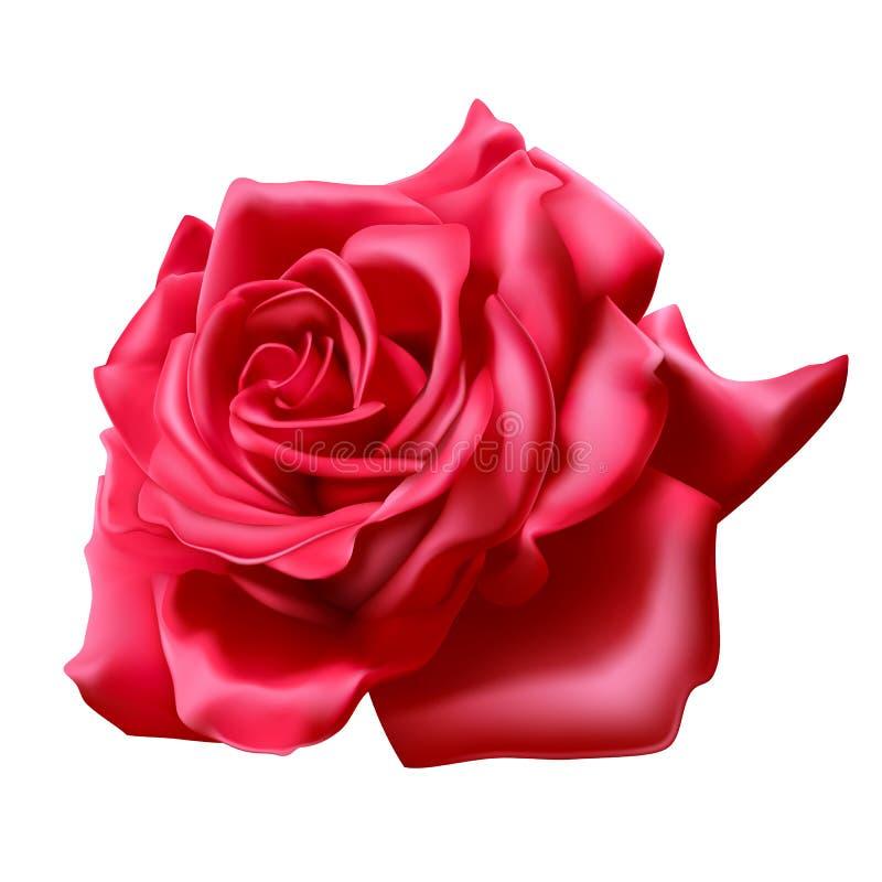 Rewolucjonistki róża na białym tle, realistyczny 3D wzrastał, wektorowa ilustracja ilustracja wektor