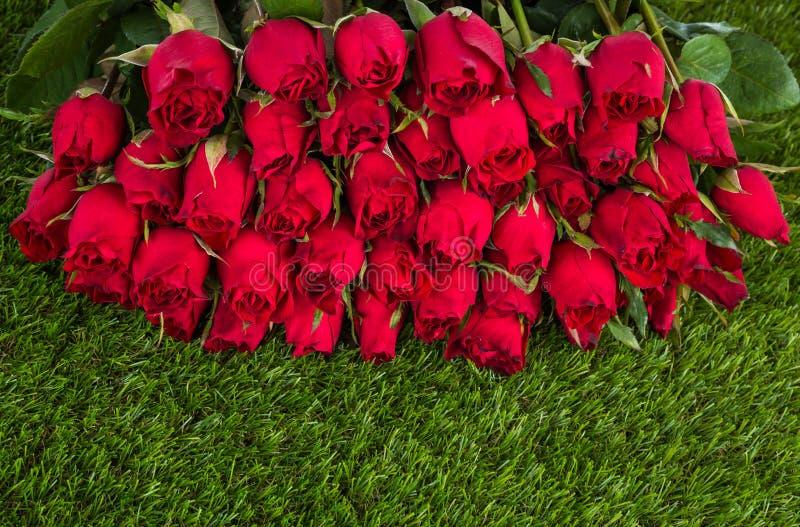 Rewolucjonistki róża na zielonej trawie fotografia royalty free