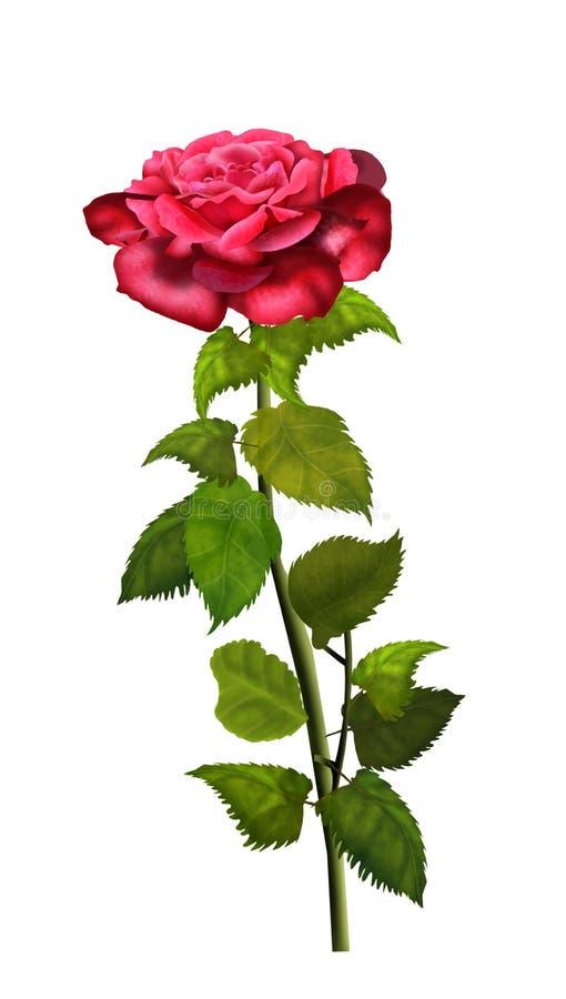 Rewolucjonistki róży kwiatu odosobniona ilustracja ilustracja wektor