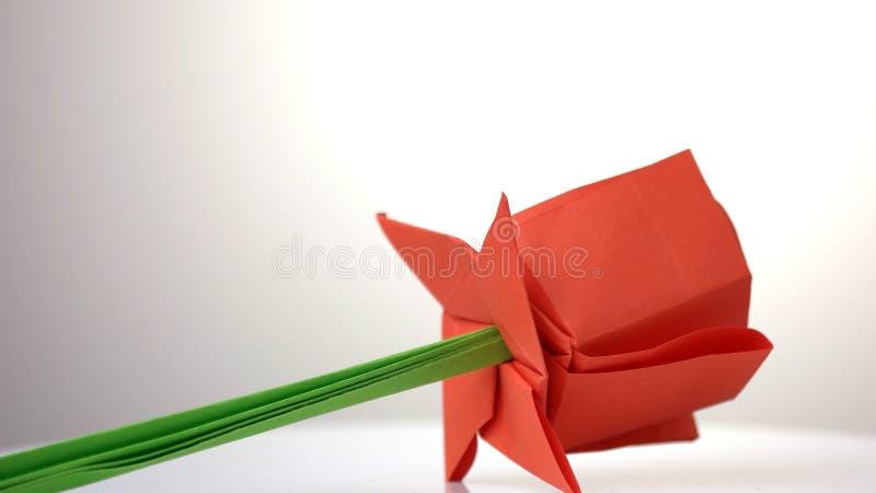 Rewolucjonistki r??y kwiatu zako?czenie up zdjęcie royalty free