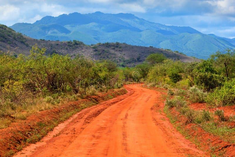 Rewolucjonistki sawanna i. Tsavo Zachodni, Kenja, Afryka zdjęcie royalty free